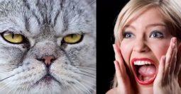 Hayvan Fobisinde Yeni Psikoterapi Metodu, Sanal Gerçeklik Terapisi
